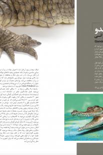 Screen-Shot-2019-04-16-at-10.34.24-AM-205x308 Magazine - KishAir - 95-6