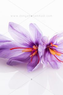 Saffron-Arnika-1-205x308 Photo Food - Arnika Flower - 1397