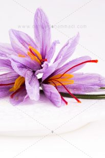 Photo Food – Arnika Flower – 1397